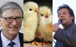 Billgates Chicken & Imran Khan