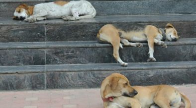 Stray Dogs Of Karachi