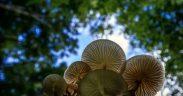 Plastic Eating Fungus